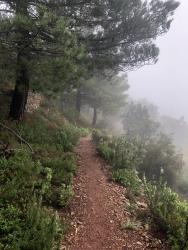 Senda con nieblas
