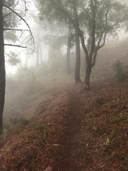 Sendas con niebla